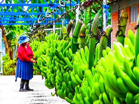 Santa Marta: Tour Zona Bananera