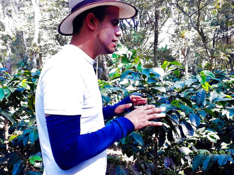 From Bogotá: Coffee Tour in Fusagasuga
