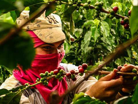 Cali: Discover What's Behind a Good Cup of Coffee