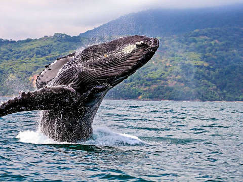 Live the Colombian Pacific With Whale Watching