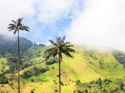 From Salento: Cocora Valley Half Day Trip