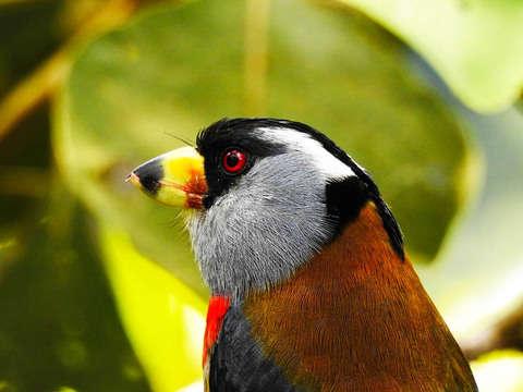 Avistamiento de Aves en Doña Dora - Alto Anchicaya