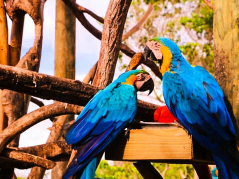 Trip to the National Aviary from Cartagena
