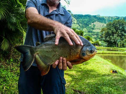 Excursión de Pesca de Un Día Al Río Cauca