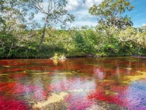 Discover Río de los Siete Colores and Caño Cristales 3d / 2n